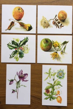 Set of Six A6 Botanical Cards Set B (275 gsm)