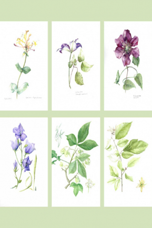 Set of Six A6 Botanical Cards Set A (275 gsm)