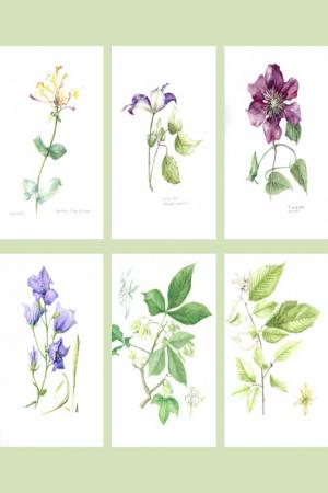 Set of Six A6 Botanical Cards Set A (275 gsm)